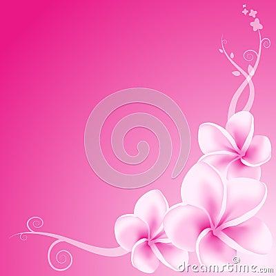 Free Pink Frangipani Flowers Royalty Free Stock Photography - 4164837
