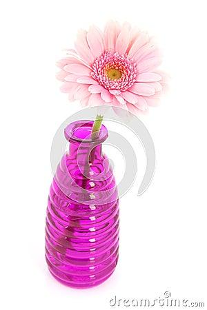 Pink Gerber in glass vases