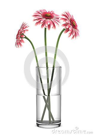 Free Pink Gerbera Daisies In Vase Isolated On White Royalty Free Stock Photos - 24903728