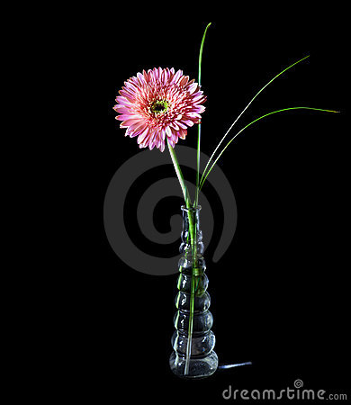 Pink gerbera in glass vase