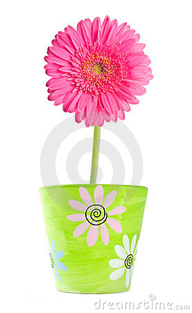 Free Pink Gerbera In A Clay Flower Pot Royalty Free Stock Photography - 17878057