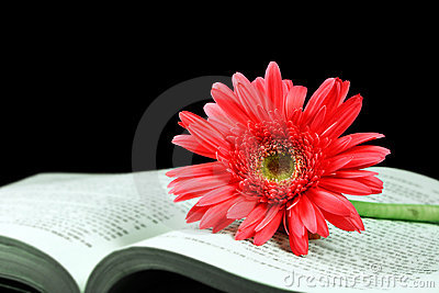 Pink gerbera on the open book