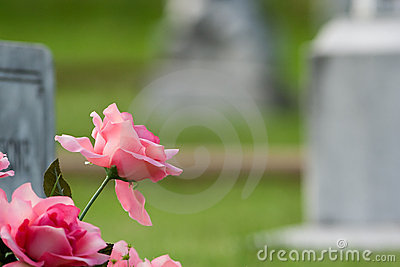 Pink grave flowers