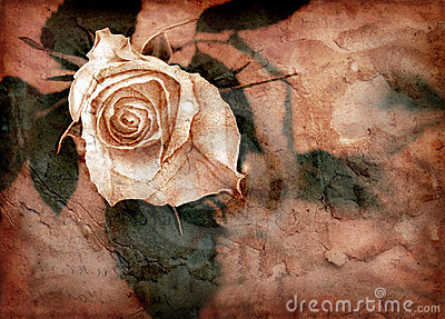 Pink grungy rose
