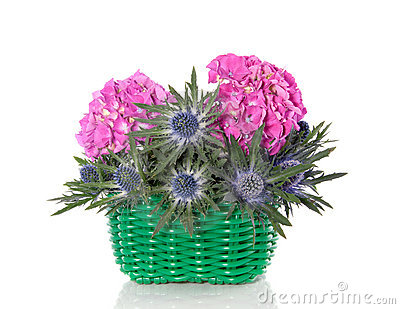 Pink hydrangea and blue thistle