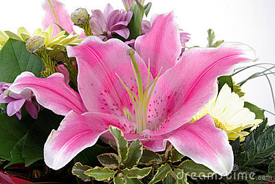 Pink lily in a bouquet with white background