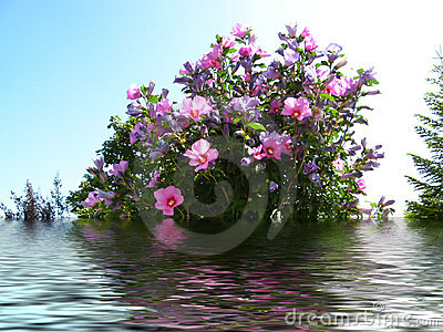Pink & lily flowers reflected in water