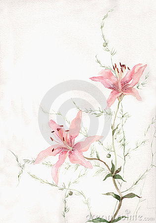 Free Pink Lily Flowers Watercolor Painting Royalty Free Stock Image - 4259056