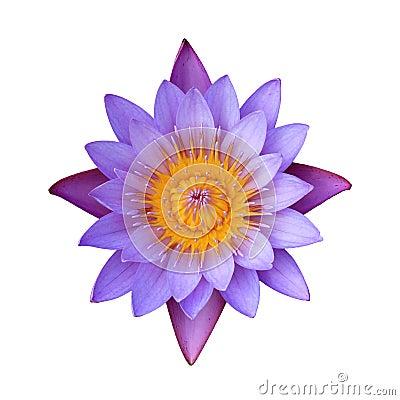Free Pink Lotus Royalty Free Stock Photography - 22687027