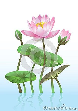 Free Pink Lotus Flower Royalty Free Stock Photography - 12410077