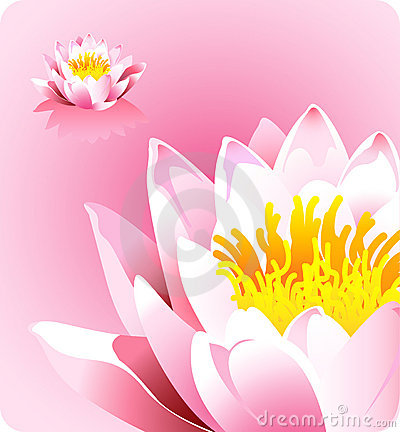 Pink lotus flower - forces of nature theme