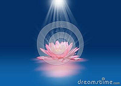 Pink lotus with light beams