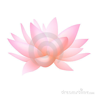 Pink lotus or water lily flower. Vector