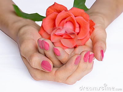 Pink manicure and scarlet rose
