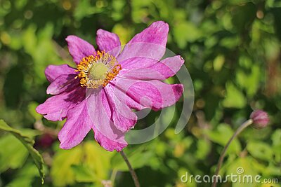 Pink And Orange Flower Before Green Leaves During Daytime Free Public Domain Cc0 Image