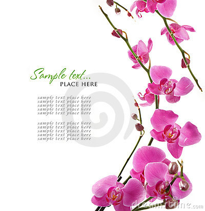 Free Pink Orchid Background Stock Image - 17285161