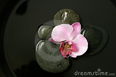Pink orchid on black stones