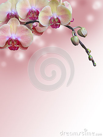 Free Pink Orchid Branch With Abstract Bokeh Background Royalty Free Stock Photos - 45219908