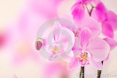 Pink orchid with bright bokeh