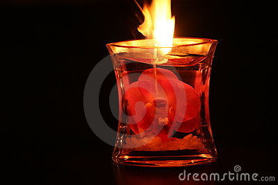 Pink Orchid Candle lit