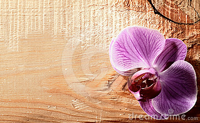 Pink orchid flower over wooden desk