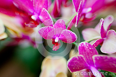Pink Orchid Flowers on Leaves Background