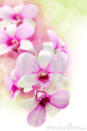 Free Pink Orchids Flower Royalty Free Stock Photography - 36107987