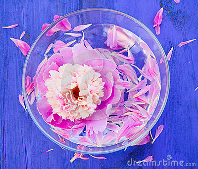 Pink Peony in bowl of water