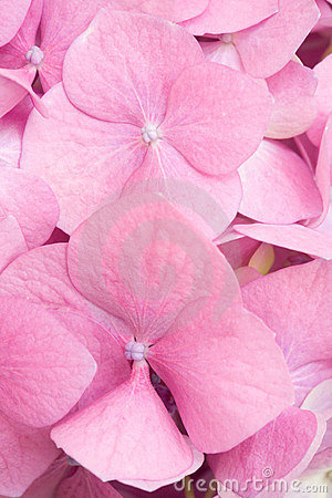 Pink petals background