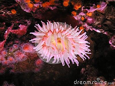 The pink petals of underwater flora