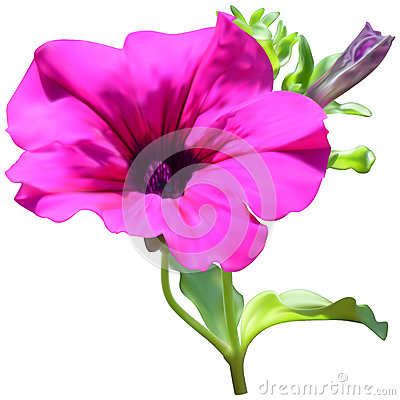 Free Pink Petunia Flower Stock Photography - 85627772