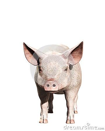 A Pink Pig 3
