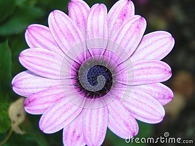 Pink/purple flower
