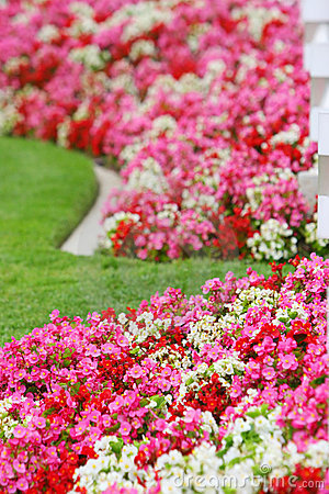 Pink red and white flowers
