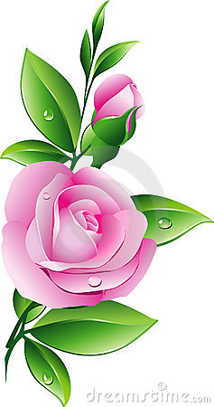 Free Pink Rose Stock Photography - 12948282