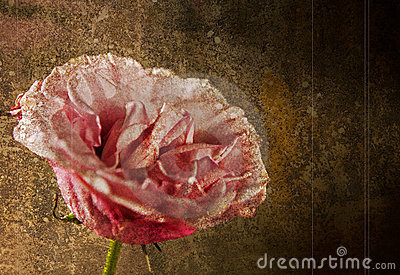 Pink rose against grunge background, rough style