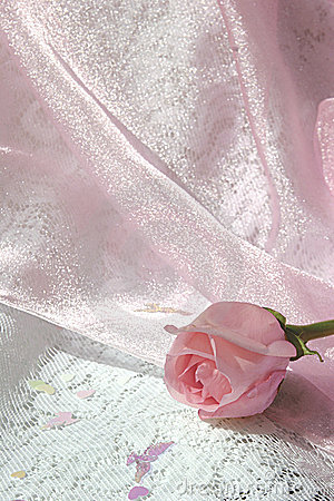 Pink rose bud on shiny pink tulle over white lace2