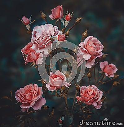 Free Pink Rose Bush  Stock Image - 89761481