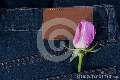 Pink rose in the jean pocket