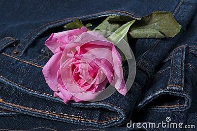 Pink rose in the jean pocket