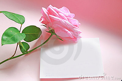 Pink rose message