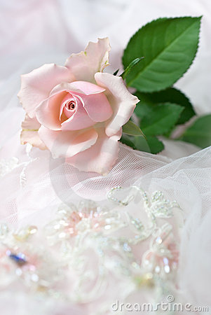 Free Pink Rose On Wedding Lace (copy Space) Royalty Free Stock Photo - 13647975