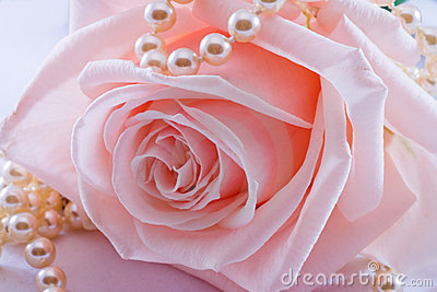 Pink Rose And Pearl Necklace Royalty Free Stock Photo ...