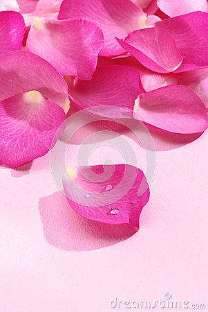 Free Pink Rose Petals Royalty Free Stock Images - 45853649