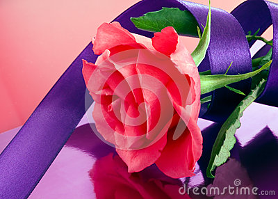 Pink rose with mauve ribbon
