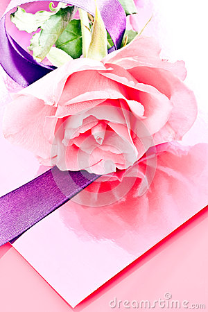 Pink rose and ribbons