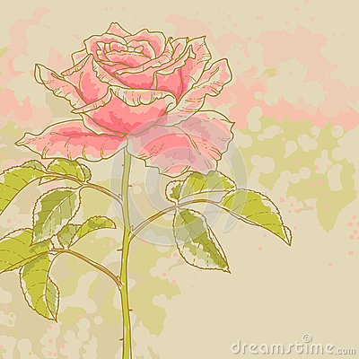 Pink rose on toned background