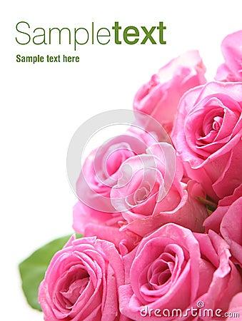 Free Pink Roses Royalty Free Stock Photo - 9640085