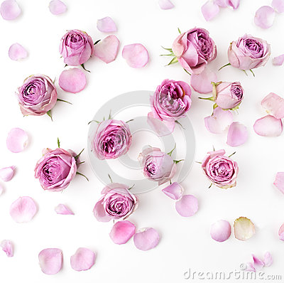 Free Pink Roses And Petals Scattered On White Background. Flat Lay, Overhead View Royalty Free Stock Image - 76978256