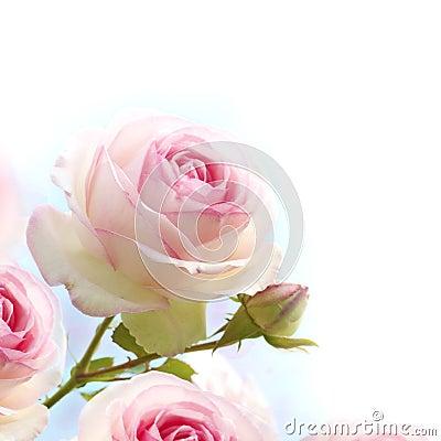 Pink roses background, floral border